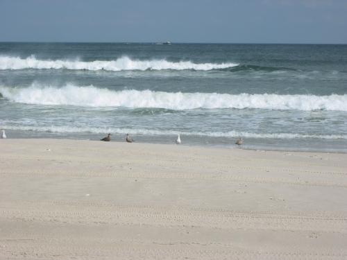 Visiting Island Beach State Park